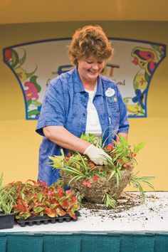 Insert spider plants on the sides. They will cover up the moss. Add begonias, a sweet potato vine, and chenille plants for color. Hang the finished basket, and watch it grow. Hanging Flower Baskets, Hanging Plants, Lavender Flowers, Red Flowers, Chenille Plant, Ivy Geraniums, Cinderella And Prince Charming, Potato Vines, Flower Festival