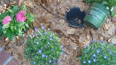 Grow Plants Outdoors with the Pot-in-Pot Method - this sounds easy