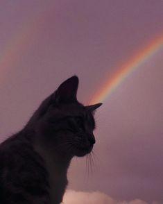 Cat Aesthetic, Purple Aesthetic, Monalisa Wallpaper, Animals And Pets, Cute Animals, Cute Cat Memes, Cute Cat Wallpaper, Pastel Sky, Iphone Wallpaper Tumblr Aesthetic