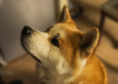 Thought I'd test out my DSLR on my akita http://ift.tt/2n5erD5