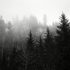 #schwarzwald #blackforest #winter #schnee #sunset