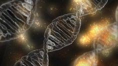 Schepping en Evolutie in de levende natuur