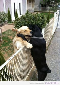 Hugs....love is love :)