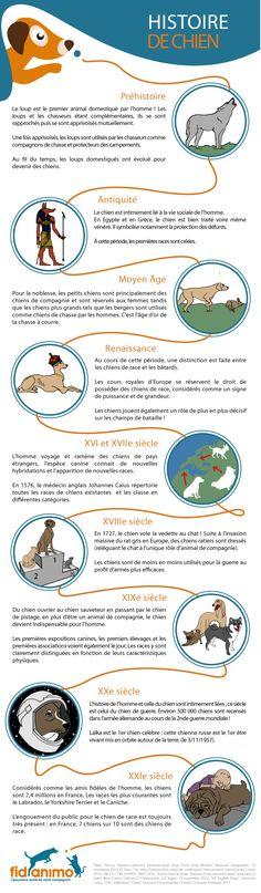 Infographie animaux : Histoire de chien. Le chien, plus fidèle ami de l'homme ? Certainement, le chien est aux côtés de l'homme depuis la nuit des temps... L'histoire de sa domestication commence à la Préhistoire alors qu'il n'était encore qu'un loup...