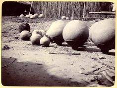 Photograph (black and white) from an album; view of several clay pots drying in the sun . Edidep-Usuk, Nigeria, 25th April 1905.  Gelatin silver print