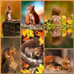 Beautiful Collage, Beautiful Birds, Animals Beautiful, Zoo Animals, Animals And Pets, Cute Animals, Collages, Illusion Art, Fall Pictures