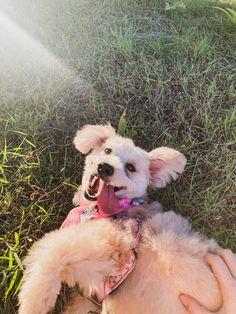#dog #doggo #poodle #poodlepuppy #puppy #poodlepuppies #doglovers #dogmom #baby #babies #shihtzu #shihtzupuppy #shitztupuppies #shihtzudog #shihtzubaby #poodlebaby Shih Tzu Puppy, Dog Mom, Poodle, Dog Lovers, Puppies, Babies, Dogs, Animals, Baby Shih Tzu