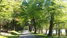 Nice walk along Kylemore lough