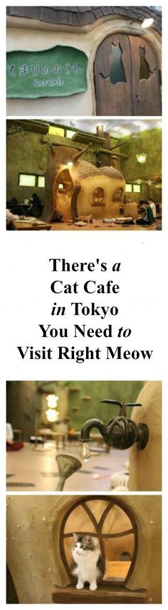 There's a cat cafe in Tokyo you need to visit right meow => http://www.traveling-cats.com/2016/08/cats-from-tokyo-japan.html (best cafes in Tokyo, Tokyo cafe interior, Tokyo cat cafe design, Tokyo cafe interior design, Tokyo cafe Japan, Tokyo coffee shop, unique, must-see, must-visit, Tokyo must-see things to do)