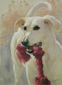 "Piper with her favorite toy. I know this dog pretty well, and took the photo I used for her portrait. This is 12 x 9"", watercolor with various pencils and pastels on my lovely Rives BFK Tan paper."