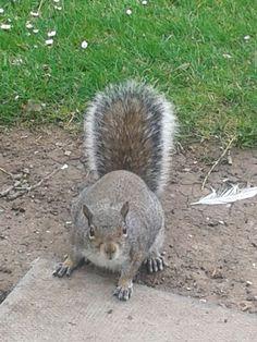 Up close squirrel