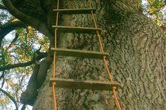 Las escaleras de soga son accesorios clásicos de las casas de árboles.