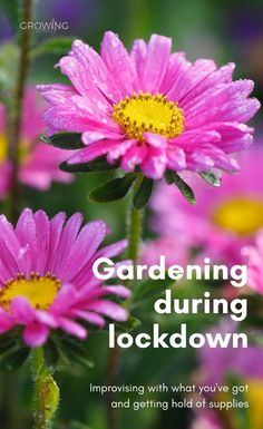 How to garden with limited supplies, plus a list of UK online retailers still taking orders. Planting Bulbs, Planting Seeds, Planting Flowers, Gardening Supplies, Gardening Tips, Beth Chatto, Kids Sand, Plant Labels, Mini Greenhouse