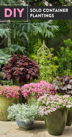 57 Best Single Plants For Containers Images Plants Container