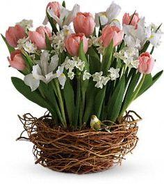 @Teleflora's Tulip Song  http://www.teleflora.com/flowers/bouquet/tulip-song-372663p.asp