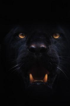 jaguar                                                                                                                                                                                 More