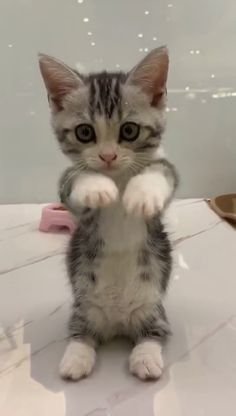 This kitty is so adorable. - Tierbilder - - Nice Katzen - This kitty is so adorable. - Tierbilder - This kitty is so adorable. Cute Baby Cats, Cute Little Animals, Cute Cats And Kittens, Cute Funny Animals, Kittens Cutest, Funny Cats, Cute Dogs, Cute Babies, Most Beautiful Cat Breeds