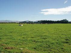 Waibury New Zealand Farm Investments Blog and News Updates, January Update 2014.