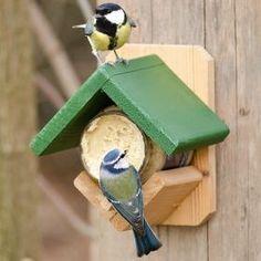 Pin Auf Vogel