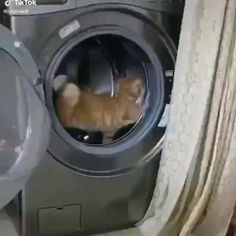 Funny Cute Cats, Cute Baby Cats, Funny Cats And Dogs, Cute Cat Gif, Cute Kittens, Funny Cat Memes, Funny Cat Videos, Cute Little Animals, Cute Funny Animals