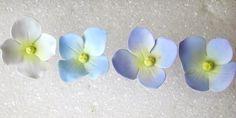 Hydrangea colouring