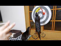 (28) 【可愛すぎるダーツ遊び】カワウソビンゴ&ベル/Darts time with otter Bingo&Belle - YouTube Darts, With, Otters, Bingo, Bookends, Youtube, Animals, Animais, Animales