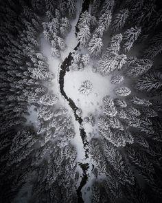 Country of origin: Winter Wonderland