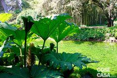 Nel giardino di Ninfa l'acqua è una presenza costante una sorta di reticolo che mantiene vivo e unisce il giardino. L'acqua entra scorrendo in un torrente con alcuni piccoli e rapidi salti impreziosito dalle fioriture degli iris e nel fiume che rappresenta uno dei confini del giardino aperto al pubblico, vero e proprio punto focale