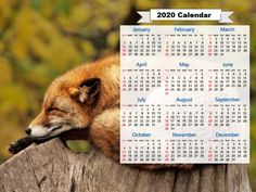 Print Free Yearly Calendar 2020 With Holidays Printable Yearly Calendar, Free Printable Calendar Templates, Printable Calendar 2020, Calendar Layout, Print Calendar, Kids Calendar, Calendar Pages, 2021 Calendar, Create A Calendar