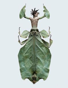 Photographer Laurent Seroussi has created a body of work entitled Insectes. This example of photographism is very convincing; bringing us a stunning morphology of creepy insects and beautiful women… Insect Photography, Art Photography, Fashion Photography, Photomontage, Mantis Religiosa, Montage Photo, Insect Art, Illusions, Creepy