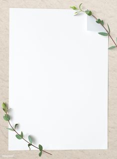 Flower Background Wallpaper, Plain Wallpaper, Framed Wallpaper, Flower Backgrounds, Background Patterns, Wallpaper Backgrounds, Background Templates, White Background Plain, Plains Background