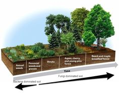 The Definitive Guide to Building Deep Rich Soils by Imitating Nature - Permaculture Apprentice Farm Gardens, Outdoor Gardens, Compost, Ecological Succession, Landscape Design, Garden Design, Forest Garden, Plantation, Aquaponics