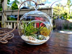Whats not to love about this unique hanging air plant terrarium! This air plant display has a tropical feel with its natural sea shells, white sand, and air plants! Terrarium Containers, Air Plant Terrarium, Terrarium Diy, Glass Terrarium, Best Indoor Plants, Indoor Garden, Room With Plants, House Plants, Hanging Air Plants