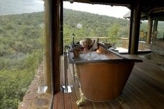 Book your stay at Sediba Private Game Lodge in Welgevonden Game Reserve, South Africa. Game Lodge, Private Games, Dream Bath, Best Bath, Game Reserve, Natural Scenery, Cool Rooms, South Africa, The Good Place