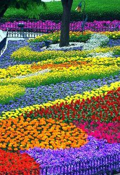 brightly colored garden
