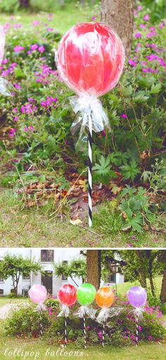 DIY Lollipop Balloons - No cellophane... just add curling ribbons under he balloon to make it look more like a topiary. Use in front yard near graduation banner