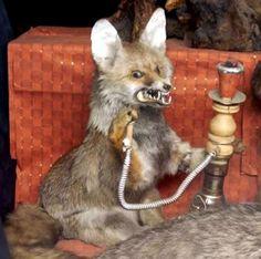Bad Taxidermy Fox. Looks like Beevis/Butthead