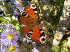 Beautiful butterflies and flowers