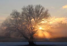 """Cornelia Duwe - """"Nebelmorgenwunderbaum"""" // myphotobook Fotocontest Februar 2013, Thema: """"Es werde Licht!"""""""