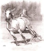 horse by Alleycatsgarden