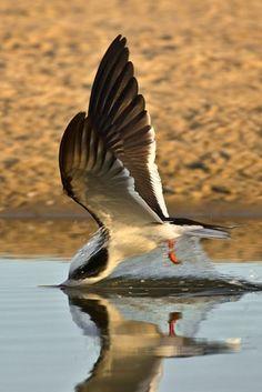 CloseUp do Mundo Animal ( 40 Imagens ) Animal Close Up, North And South America, Shorebirds, Two Birds, Mundo Animal, Big Bird, Birds Of Prey, Bird Species, Beautiful Birds