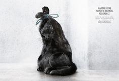 Tier im Recht | Ruf Lanz