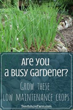 Does your garden often get overshadowed by your busy schedule? Are you looking for a low maintenance garden that fits your lifestyle? Here are some crops that will allow you to reap an abundant harvest with less work.