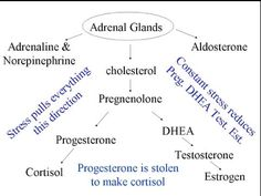 We love this simple description of Adrenal gland function. Step 1: Reduce or manage stress and balance the brain. Step 2: Eat enough real food and healthy fat so that hormones can be made from good cholesterol, Step 3: potentially use pregnenolone (guided by a health practitioner!) and then allow the body to make the rest of the hormones on it's own.