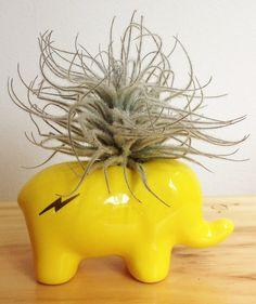Elefante Amarillo - Matera Small. $40.000 COP. Encuentra más materas, floreros y plantas ornamentales en https://www.dekosas.com/floreros-plantas-ornamentales