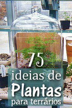 pinterest_terrarium_plants