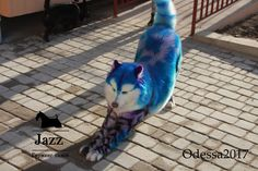Dog Hair Dye, Dog Dye, Dog Grooming Styles, Cat Grooming, Grooming Salon, Cute Funny Animals, Cute Baby Animals, Pet Dogs, Dogs And Puppies