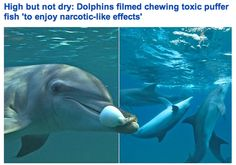 Dolphins Know How to Party.