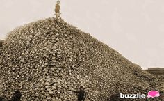 Bison Skull Mountain---By the 1870's, bisons had been hunted to near-extinction. Here's a picture of a mountain of bison skulls, to show just how many were killed in a short time.