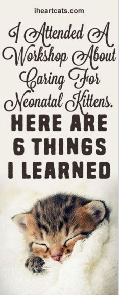I Attended A Workshop About Caring For Neonatal Kittens. Here are 6 Things I Learned